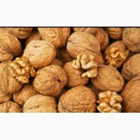 Продаём грецкие орехи