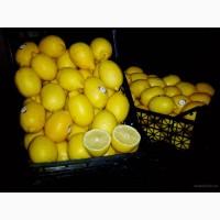 Продаем лимон оптом по цене от производителя с доставкой