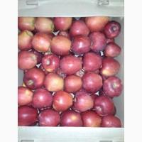 Яблоко оптом