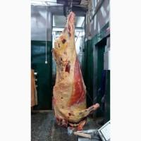 Продается Говядина в П/Т охлажденная, замороженная быки и коровы