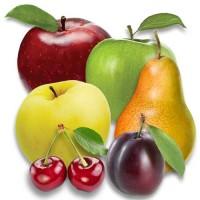 Саженцы яблони, груши, черешни, сливы, абрикосы малины. Проекты садов, поддержка