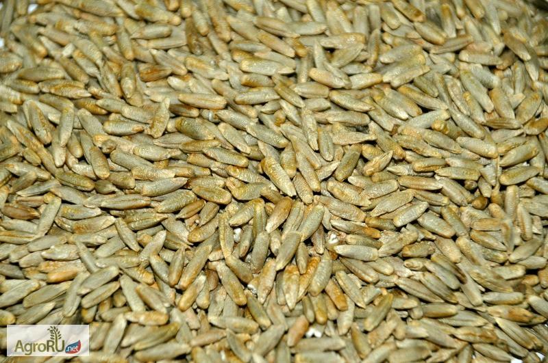 По договоренности сторон возможна оплата в рассрочку семена находятся асафетида 50 г, bharat bazaar.