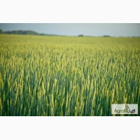 Продам земельный массив 157 Га