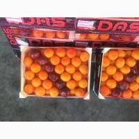 Свежий мандарин, сорт Дубиш