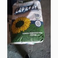 Семена подсолнечника НСХ 6008(экспресс)