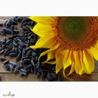 Гибриды семена подсолнечника НК Конди, НК Брио, НК Роки, Савинка от Сингента (Syngenta)