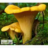 Поставка грибов и ягод из Ярославской и Костромской области