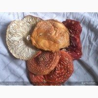 Мухомор красный сушеный(amanita muscaria)