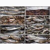 Продам рыбу оптом от производителя ( вяленная и свежемороженая )