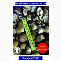 ПРОДАЮ ОПТОМ Белые замороженные грибы