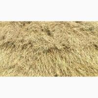 Продам сено, урожай 2018 года. Сухое, разнотравье