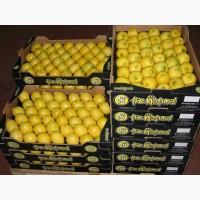 Предлагаем приобрести оптом лимон высокого качества по цене от производиеля