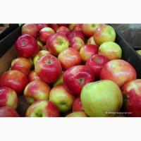 Яблоки Гала по цене от производителя с доставкой по России
