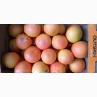 Грейпфрут готов к заказу оптом по цене от производителя