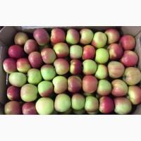 Яблоко оптом от производителя